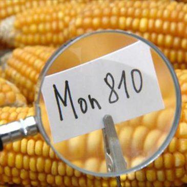 Alimentos transgénicos: ¿una herramienta más en ciencia alimentaria o un tóxico negocio millonario?
