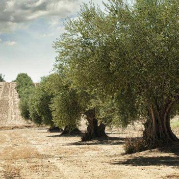 Cuidar de los suelos vivos devolviendo el valor a los agricultores, con Marta G. Rivera del Consejo Mundial del Clima
